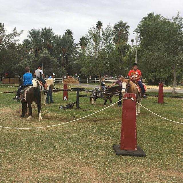 Pony ring, pony rides