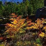 couleurs-automne.jpg