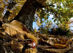 la-corse-en-automne.jpg