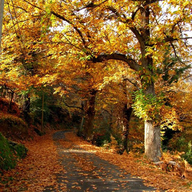 automnecorse12