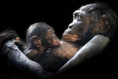 animals-1097143_1280.jpg