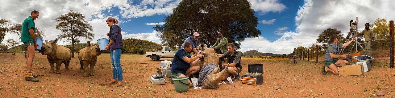 Panotriptych Rhino Pride Foundation