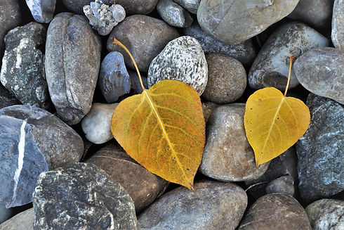 Two leaves on rocks.jpg
