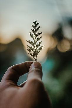 Person Holding Green Leaf.jpg
