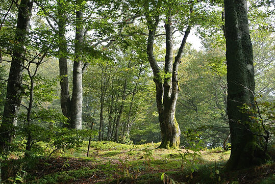 forest-1695646.jpg