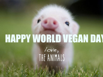 Training Update and World Vegan Day 2020