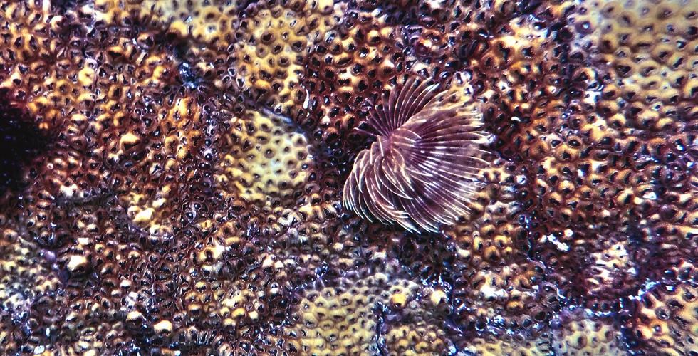 """Florescent Woo"" - Photography - Underwater World Series - Aqualand"