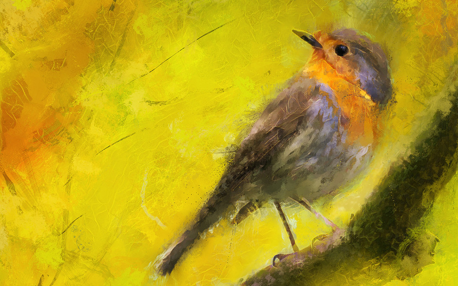 Little Bird Study