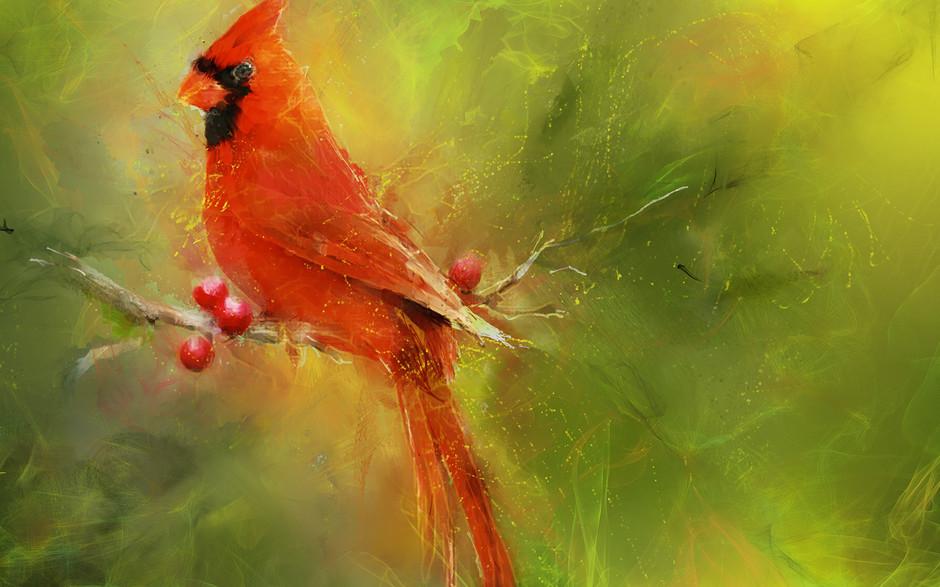 Cardinal - Bird Studt