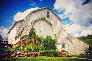 Golden Oak Farm barn