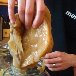 Kombucha Tea and Vinegar