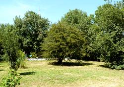 09_piscine_jardin