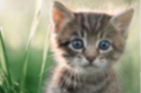 June Kitten.jpg