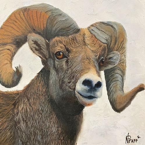 """Montana Big Horn"