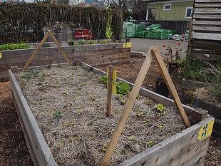 Finca garden, raised beds, netting copy.
