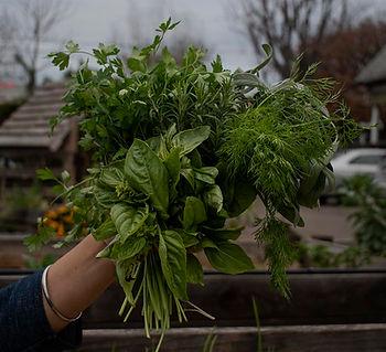 Herbs copy.jpg