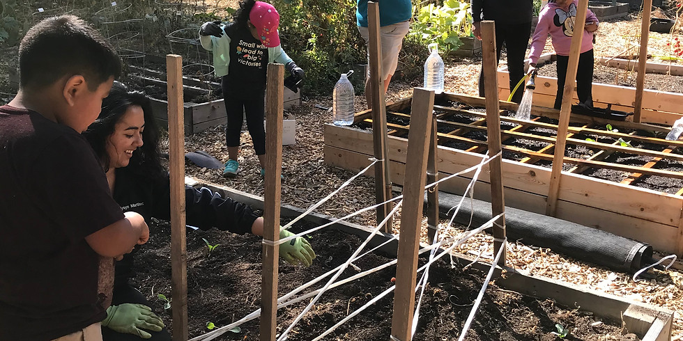 Soil/Mulch/Tomato cages/Plants/Garden Beds