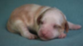 Ronja's teal boy 1 week old #2.JPG