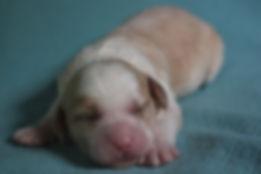 Ronja's no collar boy 1 week old.JPG