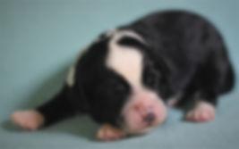 Ronja's red girl 1 week old # 2.JPG
