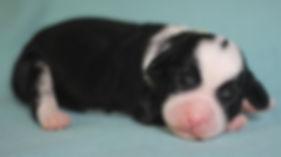 Ronja's yellow girl 1 week old # 2.JPG