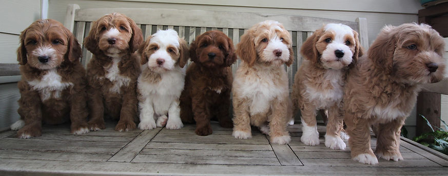 Petunia's puppies group picture.JPG
