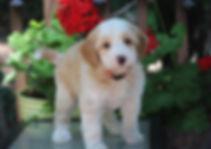 Ronja's pink girl 7 weeks old.JPG