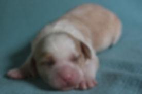Ronja's pink girl 1 week old # 2.JPG