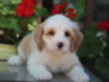 Ronja's teal boy 7 weeks old #2.JPG