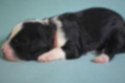 Ronja's red girl 1 week old.JPG