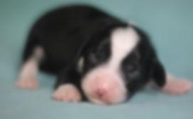 Ronja's mint boy weeks old #2.JPG