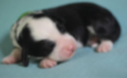 Ronja's green boy 1 week old.JPG