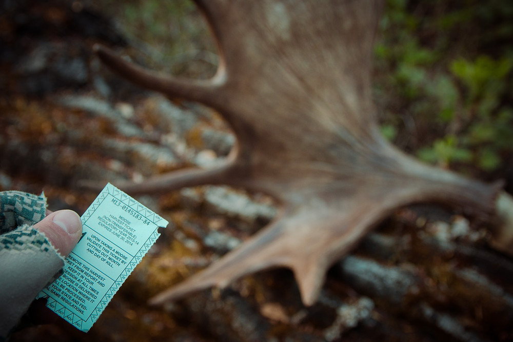 Moose Hunting: A Guide to Success