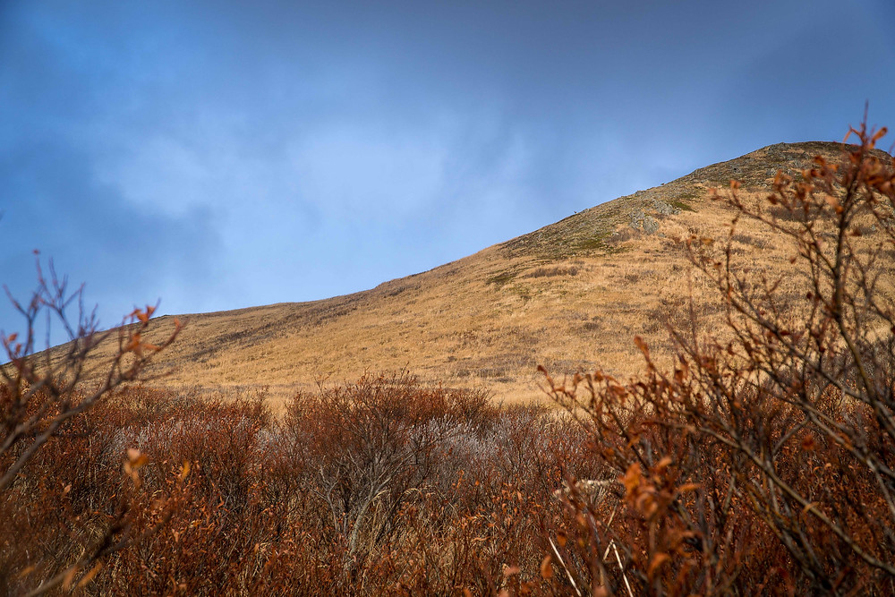 Kodiak in November