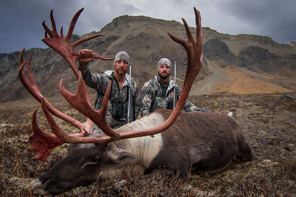 John Whipple's Boone and Crockett Barren Ground Caribou