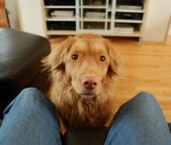 hungrydog.jpg