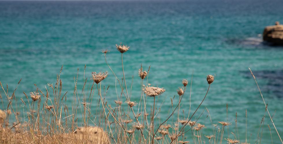 Puglia00005 - cópia.png