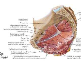 Women's Health - Pelvic Floor Dysfunction & Osteopathy