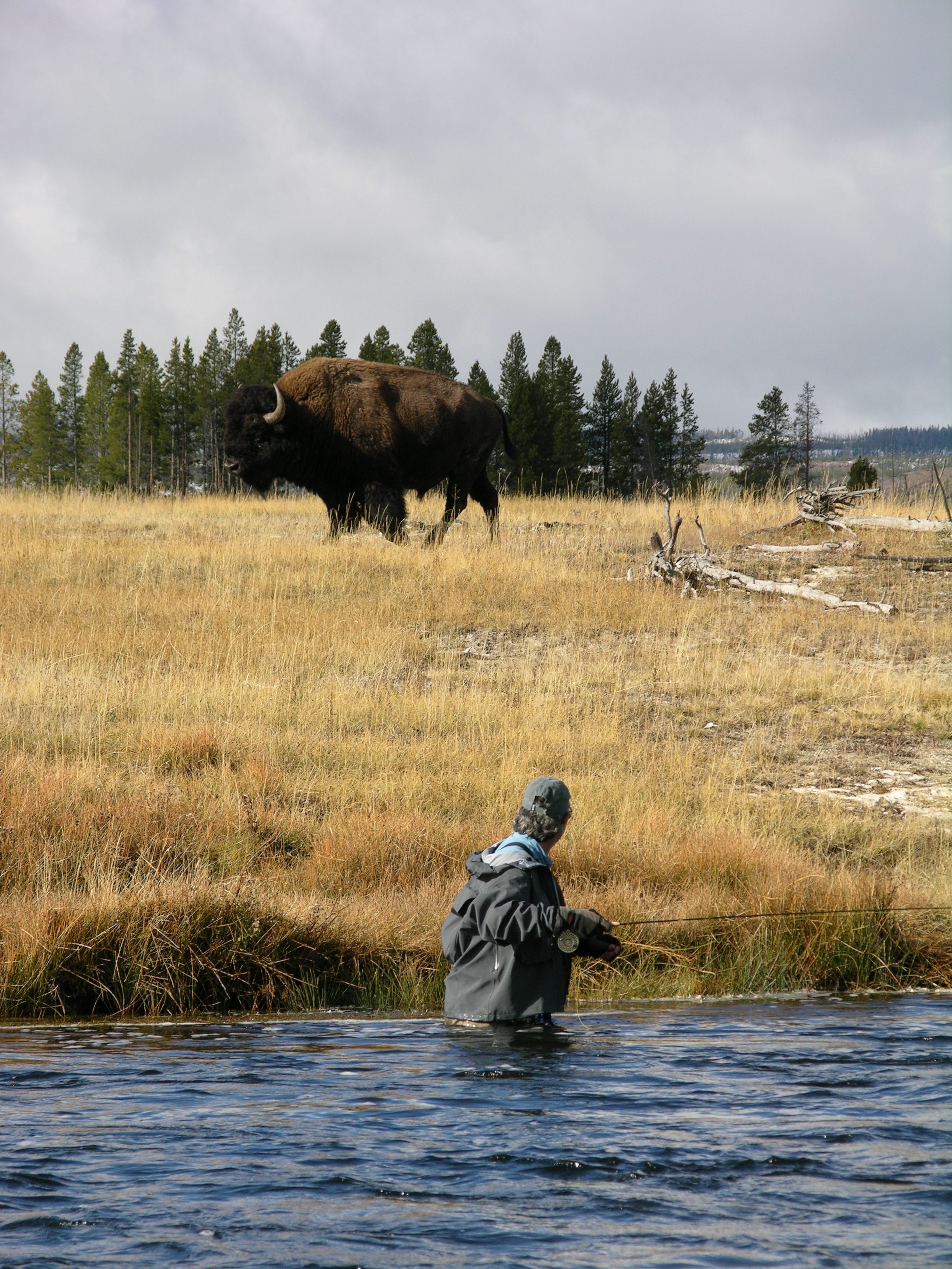 Bison and Angler Firehole River Yellowstone Park.jpg