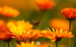 honey-bee-1024x640
