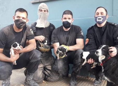 Bomberos héroes rescataron un grupo de cachorros que cayeron y quedaron atrapados en el desagüe