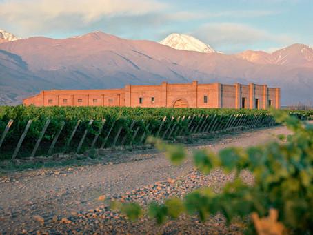 Exportaciones de vinos alcanzaron en 2020 el volumen más alto en 12 años