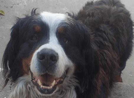 Emo, el perro que roba tan seguido un almacén que le abrieron una cuenta corriente