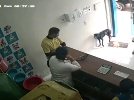 Increible video: perro callejero entró a una veterinaria y mostró su pata lesionada para ser curado