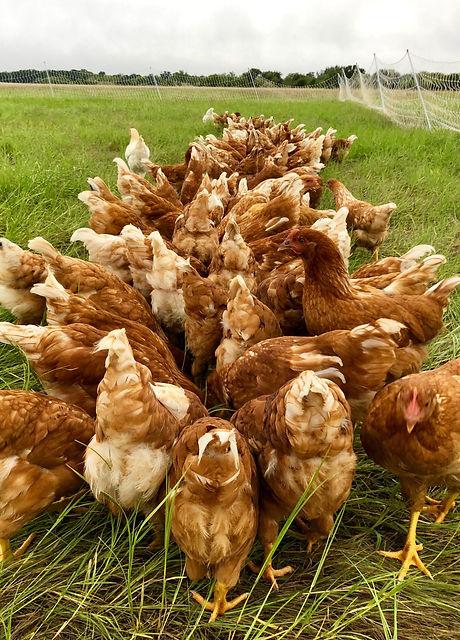 Pasture Raised Eggs B&C Farm Abilene Tex