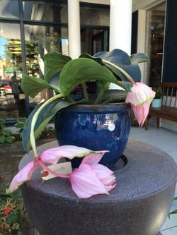 Atelier_Floral_Plantes_2b