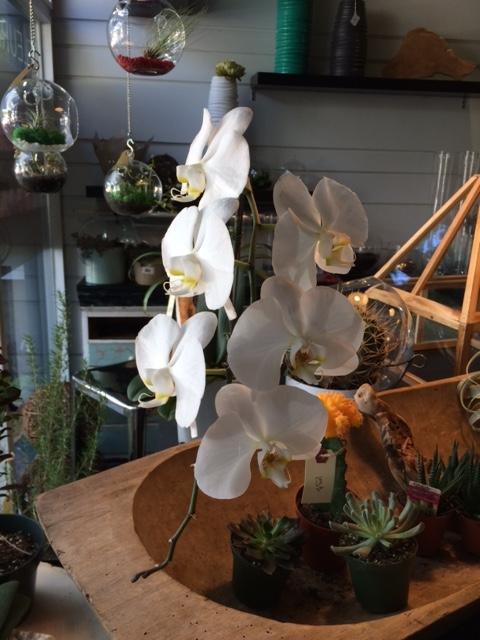 Atelier_Floral_Plantes_2a