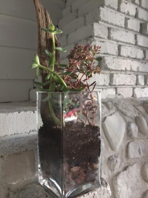 Atelier_Floral_Plantes_4a