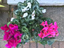 Atelier_Floral_Plantes_3b