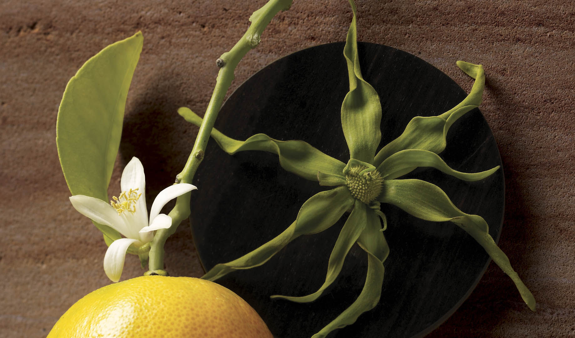 DR10_02_crop_r2_Bildrechte bis 150415.jp